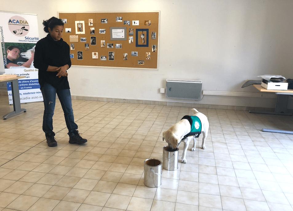 Medical Detection dog