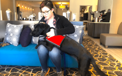 Psychiatric and Autism (ASD) service dogs